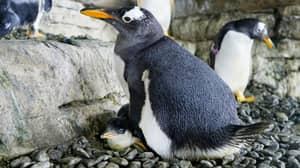 Same-Sex Penguins Becoming Proud Parents After Adopting An Egg