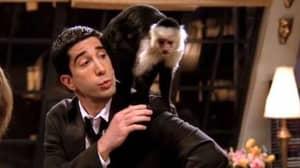 Marcel The Monkey's Trainer Kicks Off At Friends' David Schwimmer