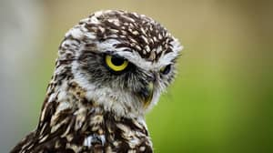 People Are Just Realising How Long Owls Legs Are And It's Freaking Them Out