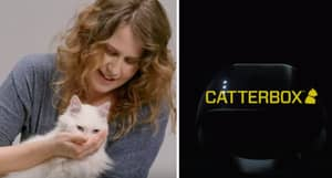 This Collar Will Allow Your Cat To Actually Talk To You
