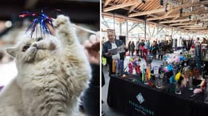 Crazy Cat Ladies Assemble! A Huge Feline Festival Is Coming To The UK