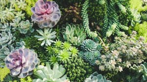 People Are Turning Glass Tables Into Succulent Gardens