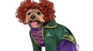 You Can Now Dress Your Dog Up As Winifred From Hocus Pocus For Halloween