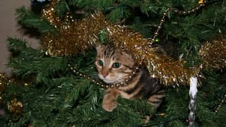 You Can Now Get Real Cat-Proof Christmas Trees
