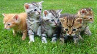 Owners Warned To Keep Their Cats Inside Due To Fears Of 'Kitten Crisis'