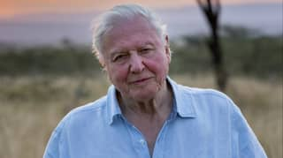 David Attenborough's New Documentary 'A Life On Our Planet' Lands On Netflix Today