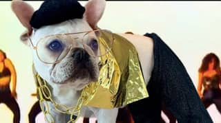 Toad The French Bulldog Dresses Up As Different Character Every Day