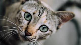 You Can Communicate With Your Cat By Blinking At Them