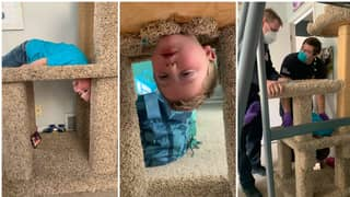 Mum Has To Call Fire Brigade After Son Gets Stuck In Cat Scratching Post