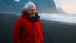 David Attenborough's 'Planet Earth: A Celebration' Featuring Dave Gets Release Date