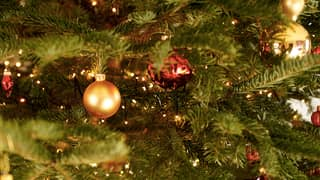 People Warned To Look Out For Walnut Sized Lumps On Christmas Trees