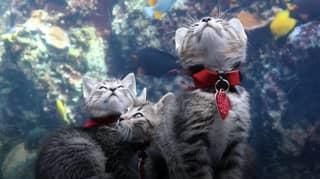 Adorable Kittens Allowed To Roam Around Aquarium