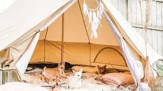 Garden Glamping Is The Latest Lockdown Trend You Need To Try
