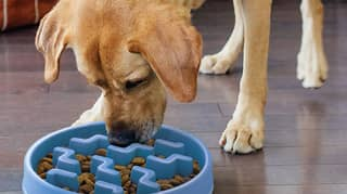 You Can Now Get A Slow Feeding Bowl For Your Gluttonous Dog