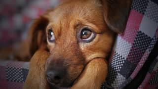 80% Of People Want A Ban On Fireworks Sales To Protect Pets