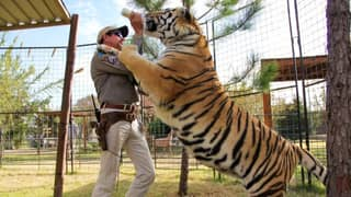 New 'Tiger King' TV Series Announced With Nicolas Cage As Joe Exotic