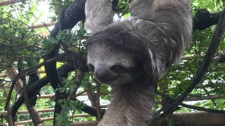You Can Now Stay In The Costa Rican Rainforest With Sloths