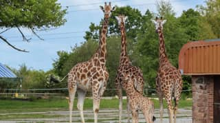 Chester Zoo Is Begging The Public To Help Save It From Permanent Closure