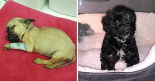 Puppies Die After Being Bred By Dog Farmer Exploiting Covid-19 Rules