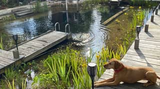 Couple Builds Natural Swimming Pool In Their Garden And The Results Are Stunning