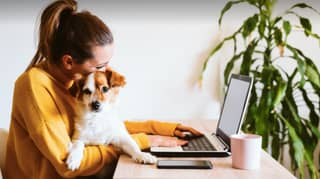 Experts Warns Dog Owners Should Start Preparing For Return To Work Now To Avoid Causing Pet Anxiety