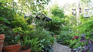 Couple Transform Their Garden Into An Incredible Tropical Paradise