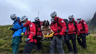 St Bernard Dog Rescued From Highest Mountain In England After She Collapsed