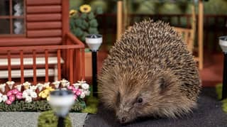 The World's First Holiday Park For Hedgehogs Has Opened In The UK