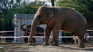 World's 'Loneliest Elephant' Makes Contact With Another Of His Species For First Time In Eight Years