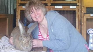 Rabbit Literally 'Frightened to Death' After Loud Fireworks Left It Shaking Violently