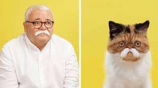 Photographer Hilariously Captures Cats And Their Human Doubles