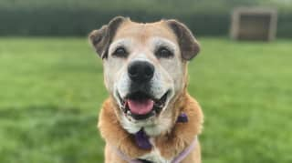 Dogs Trust's 'Loneliest Dog' Molly Looking For Forever Home After Spending 11 Years In Kennels