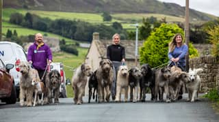 Family Who Share Their House With 10 Massive Irish Wolfhounds Are Literally Living The Dream