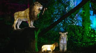 ​Chester Zoo's Lantern Festival Is Returning This Year