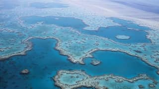 Great Barrier Reef Has Lost Half Its Corals Since 1995