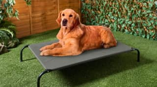 B&M Is Selling Sun Loungers For Your Dog
