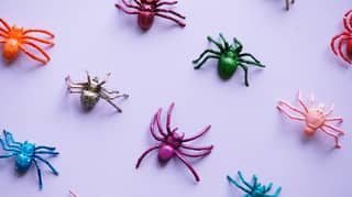 Woman Shares Amazing Hack To Keep Spiders Out Of Your Home