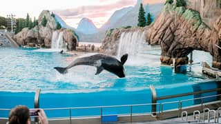 France To Ban Use Of Wild Animals In Circuses, Orca In Marine Parks And Mink Farming