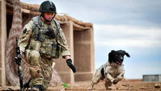 Britain's First Memorial For Military Dogs Unveiled