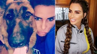 Katie Price 'Lets Dogs Poo Inside Mansion And Doesn't Clean It Up'