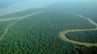 Amazon Rainforest Will Be Wiped Out By 2064, Scientist Warn