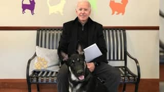 Joe Biden's Dog Will Get 'Indoguration' As White House's First Rescue Dog