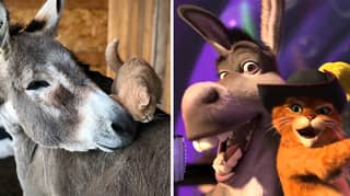 Shrek's Puss In Boots And Donkey Come To Life With This Adorable Real Life Cat And Donkey Duo