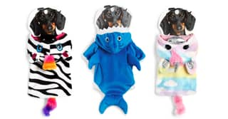 Primark Has Added Adorable New Items To Its Doggy Clothing Collection