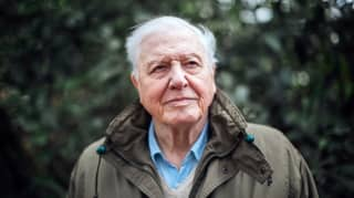 New David Attenborough Nature Series 'A Perfect Planet' Is Coming To The BBC