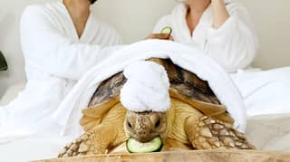Couple Coordinate Their Outfits With Their Pet Tortoise