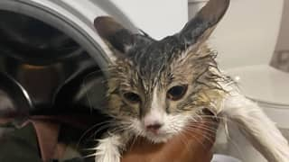 Cat Miraculously Survives After Owner Turned On The Washing Machine With Him Inside