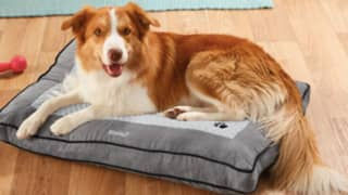 Lidl Is Selling A Heated Dog Bed To Keep Your Pooch Warm This Winter