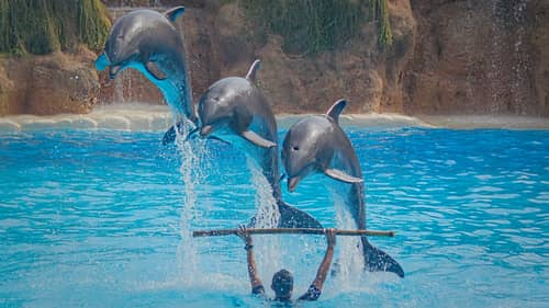 Dolphin Shows Are Banned Under New Law In Australian State New South Wales