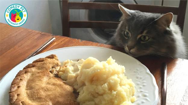 Pet Photography Competition Is Offering A £2,000 Prize For The 'Funniest Pet Picture'
